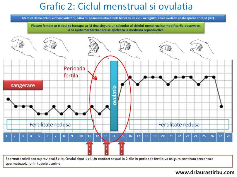 grafic2.png