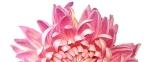 banner-flower_1